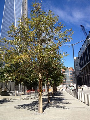 4-World-Trade-Center-oak-trees