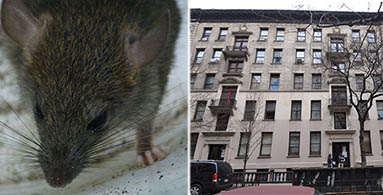 From left: rat and 207 West 107th Street